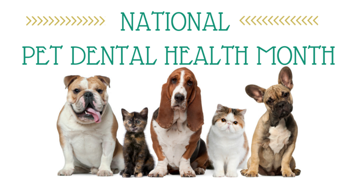 February Is One Of Our Favorite Months At Glove Cities Veterinary Hospital It National Pet Dental Health Month This A Dedicated To Educating